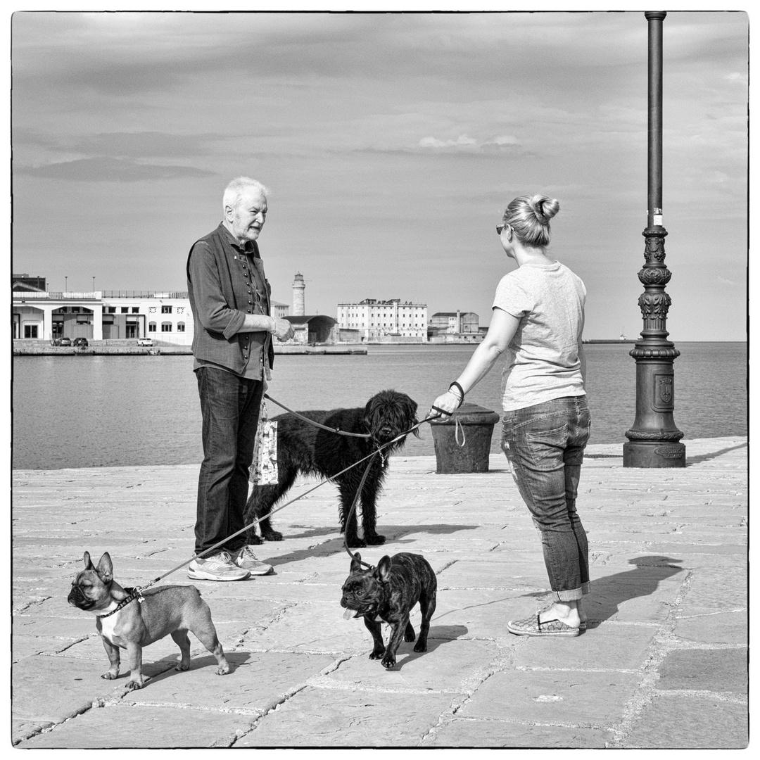 Storie di cani da Trieste IV