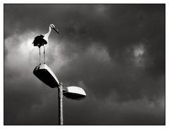 Stork....