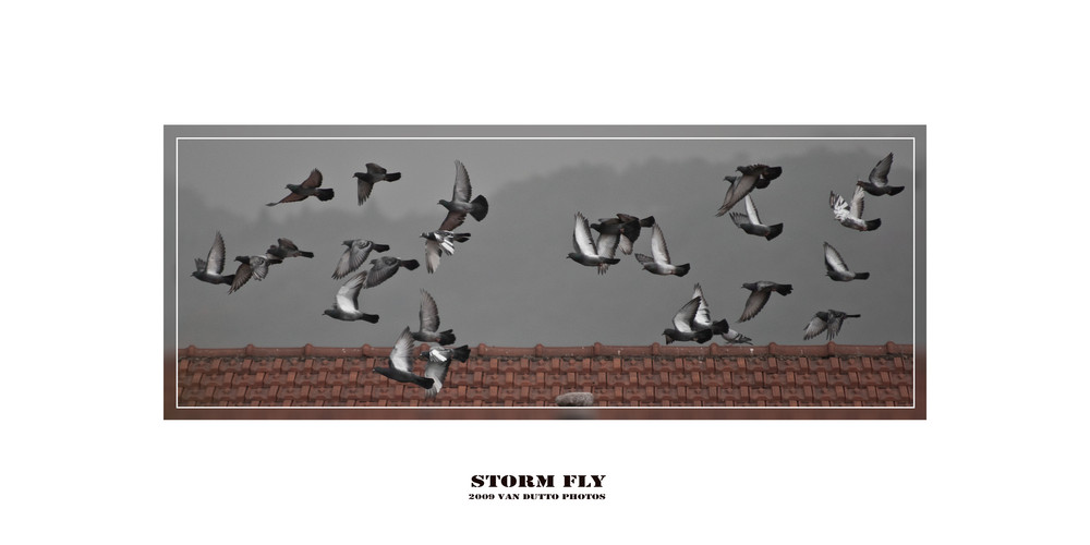 Storm Fly