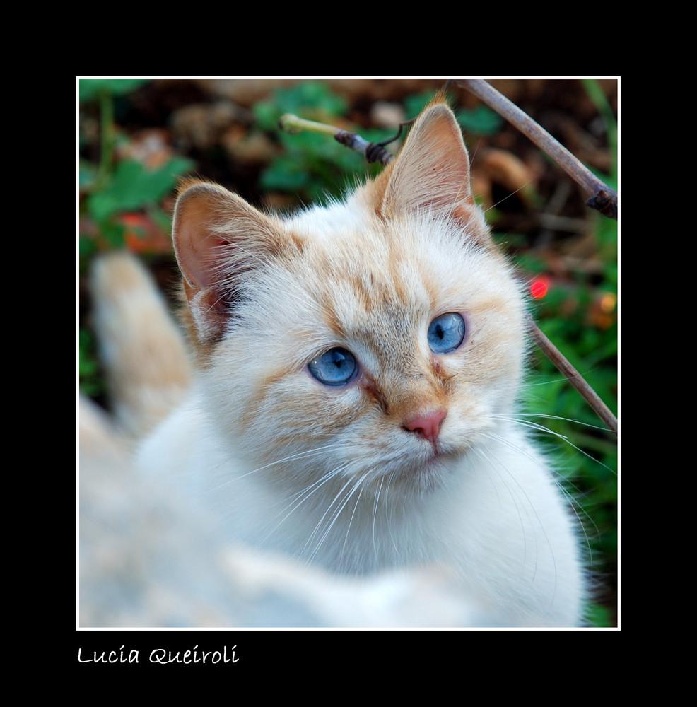 strabismo di Venere.....anche nella gattina