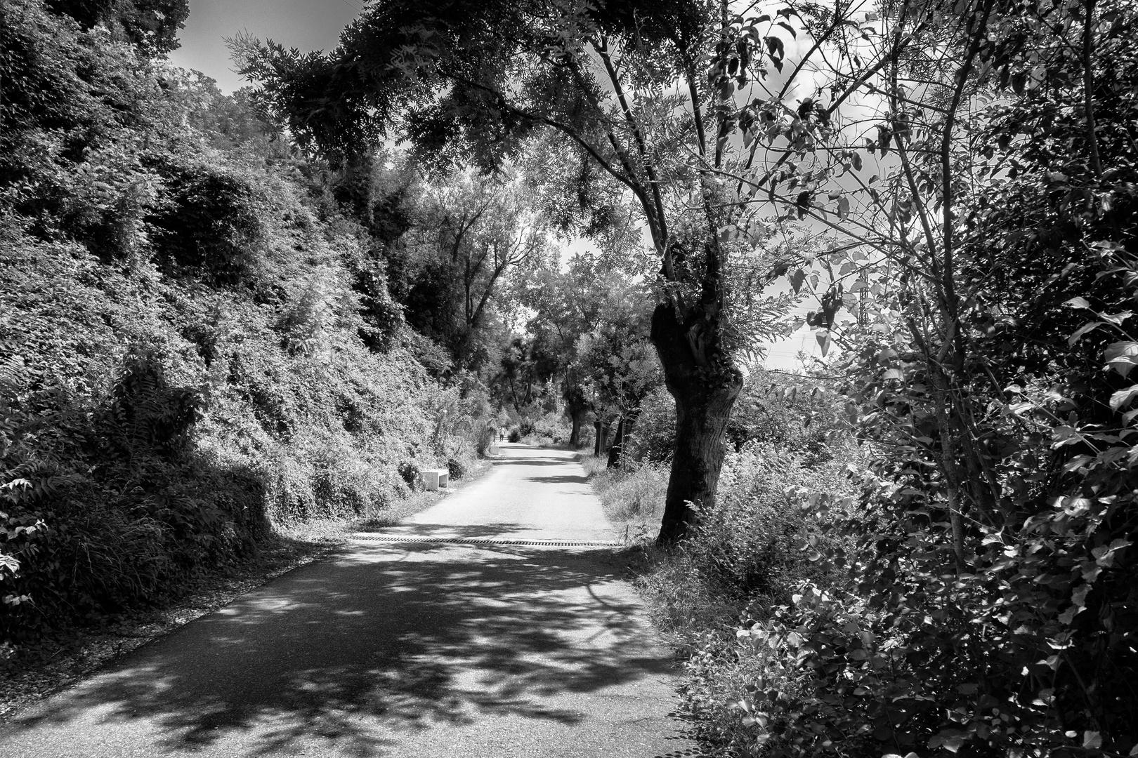 Strada verso Crespi d'Adda