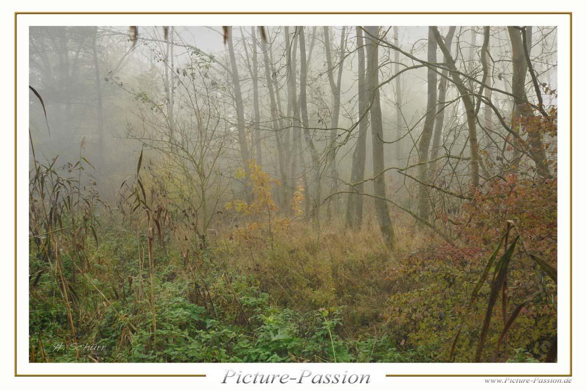 Sträucher im Nebel
