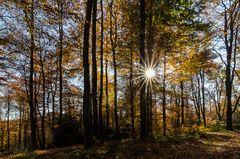 Strahlen im Wald