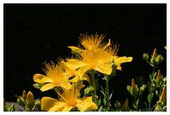 strahlend gelb