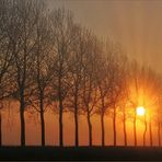 Strahlende Bäume