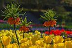 Strahlende Frühlingspracht....