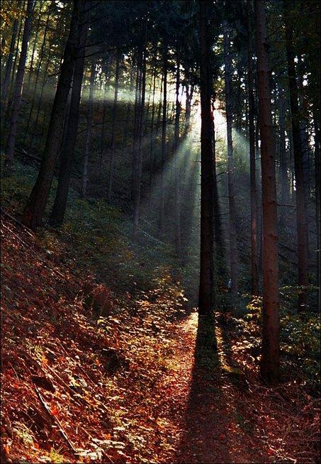 Strahlender Herbst