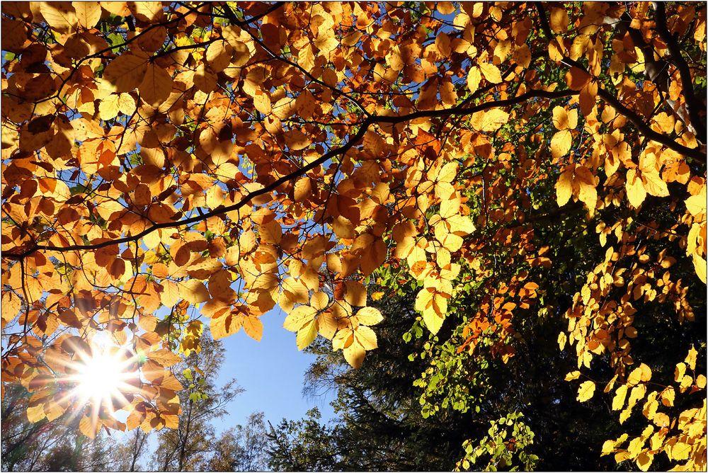 Strahlender Herbst...
