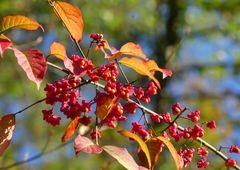 Strahlender Herbst im Wald