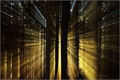 Strahlender Wald...