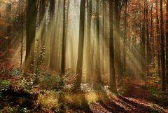 Strahlendes Herbstlicht