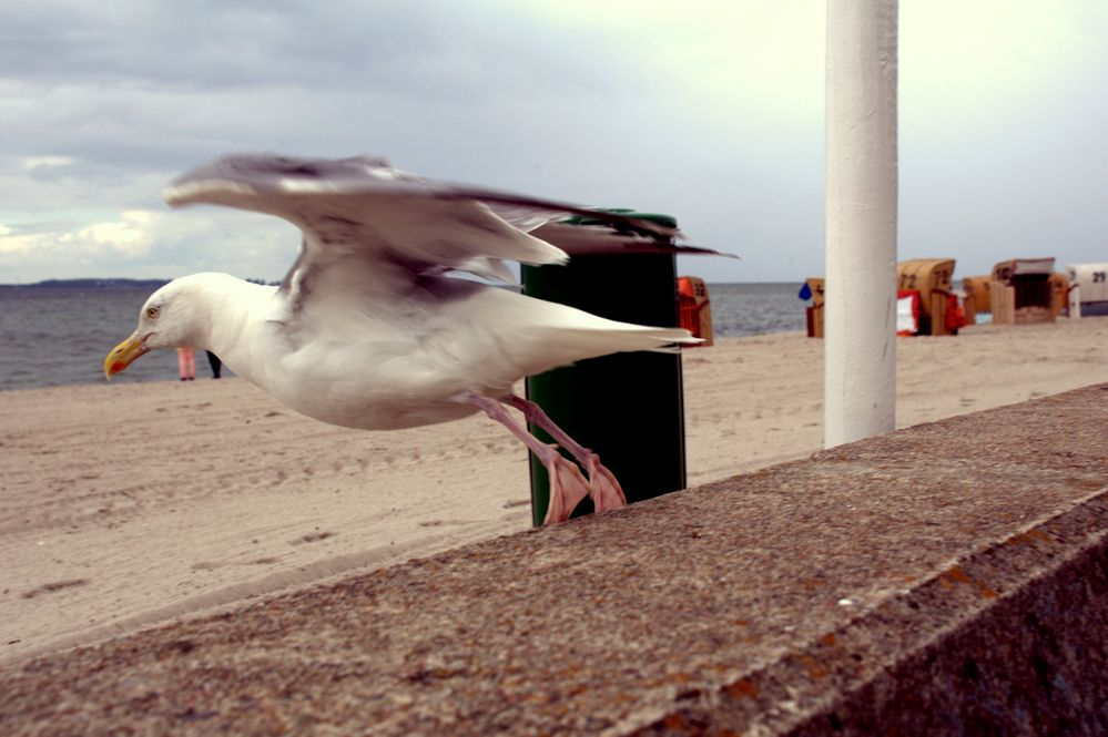 Strand fast leer,keine Fischbrötchen,Mülleimer zu,ich mach den Abflug