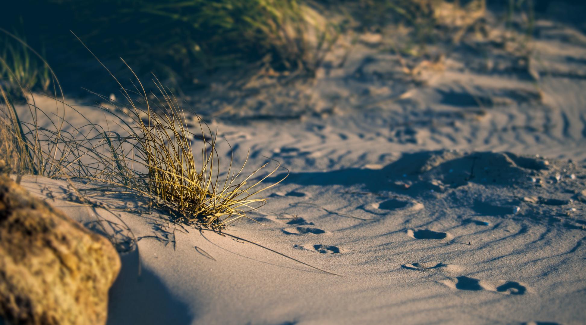 Strand Idylle bei Abenddämmerung