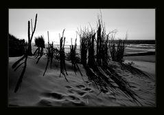Strand mit Strohhalm
