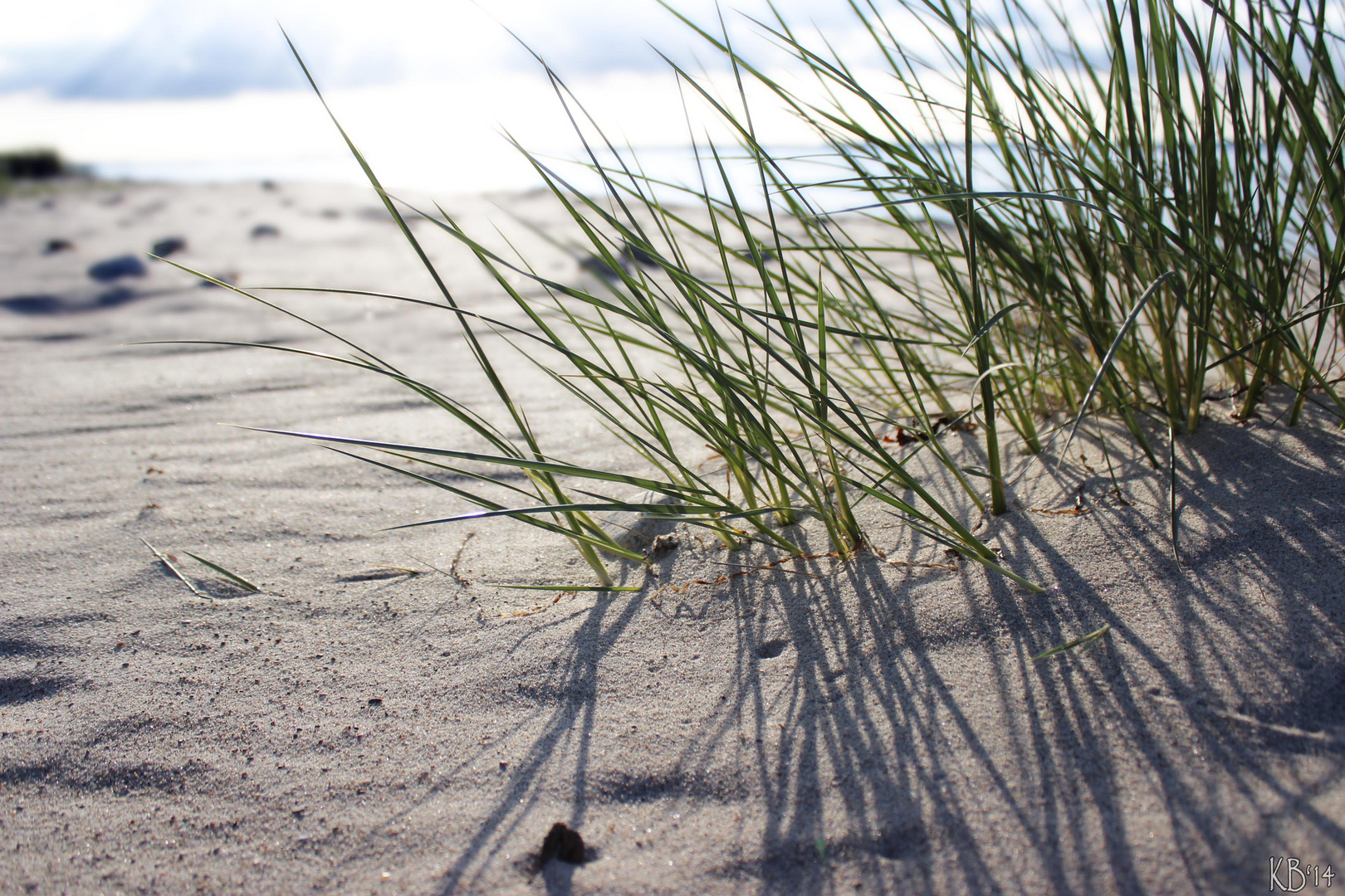 Strand Noer