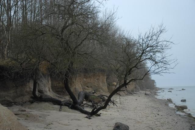 Strandbaum