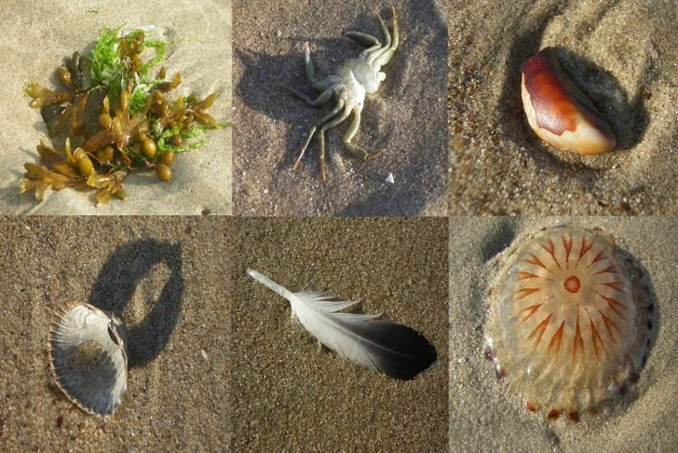 Strandfunde