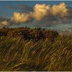 Strandgras im Herbstwind... (mit poetischen Zeilen...)