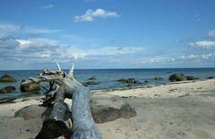 Strandgut