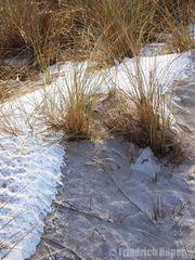 Strandhafer am Strand bei Noer