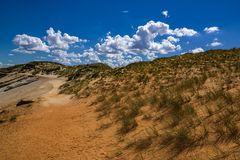 Strandhafer ... Dünenschutz ist Inselschutz