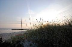 Strandhafer im Morgenlicht