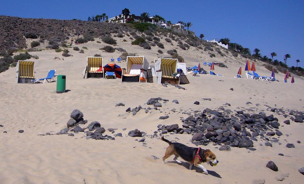 Strandkörbe auf Fuerteventura