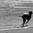 - Strandläufer -