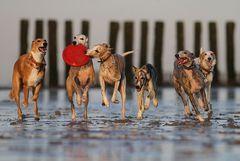 Strandläufer :))))
