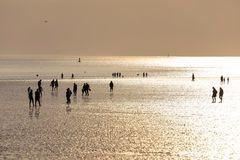 Strandläufer **