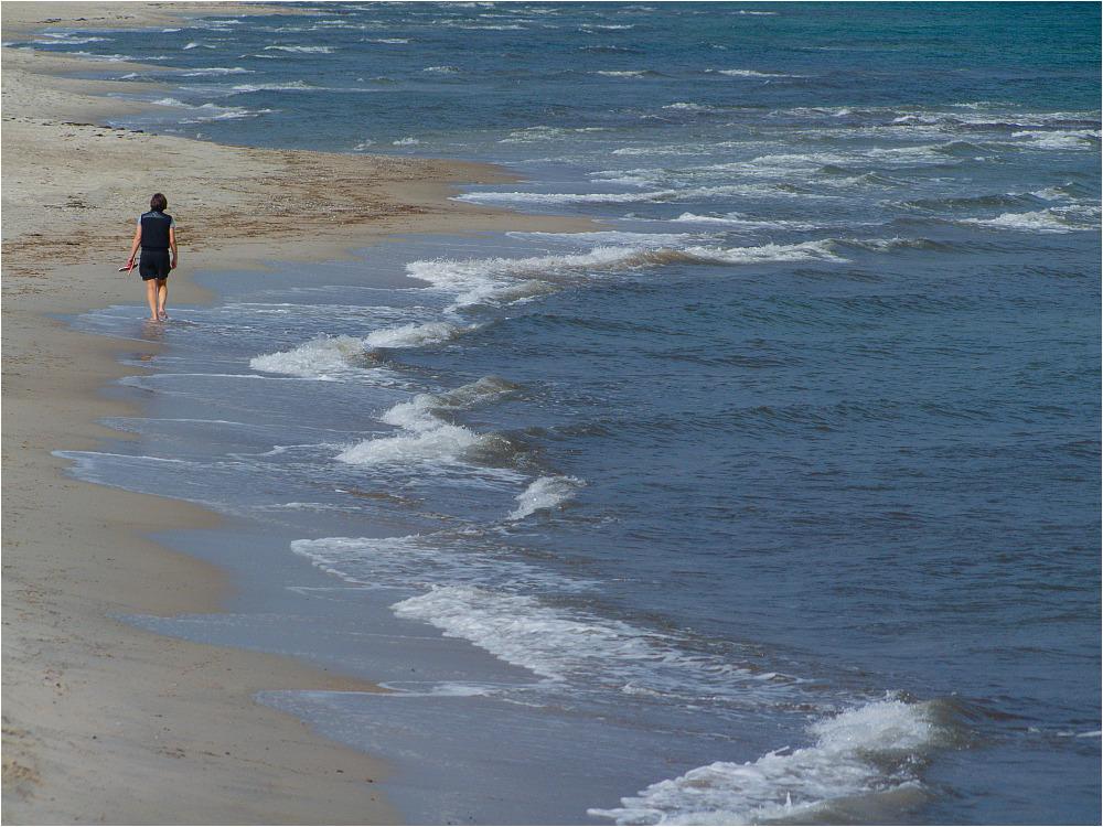 Strandläufer ...