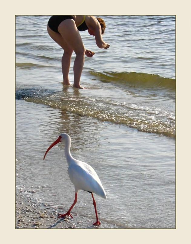 Strandläufer...