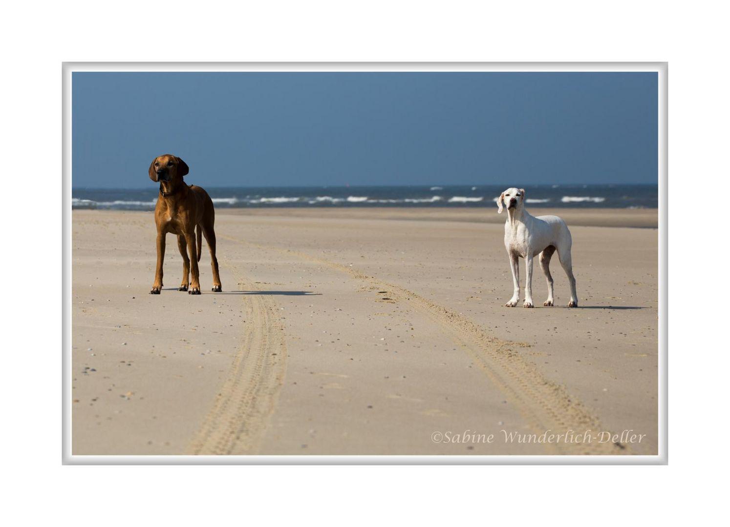 """Strandläufer  """"  Hunde am Strand """""""