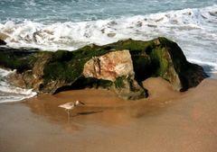 Strandläufer (Schnepfe) im Schutz eines Meeresungeheuers