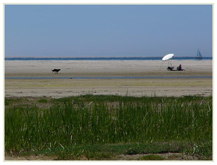 Strandleben auf Schiermonnikoog