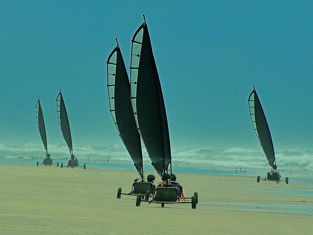 Strandsegler auf Terschelling