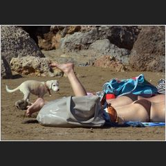 Strandstillleben