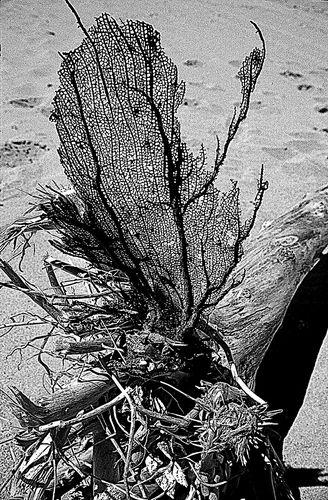Strandzeichnung