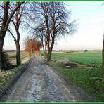 Straße 1914 oder 2014