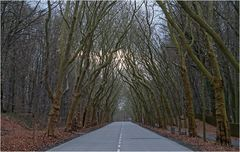 Straße in Potsdam-Nord