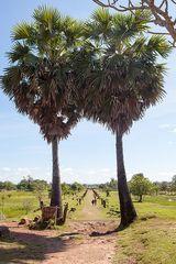 Straße zum Wat Phou