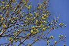 Straßenbaum~~~~Nr. 1