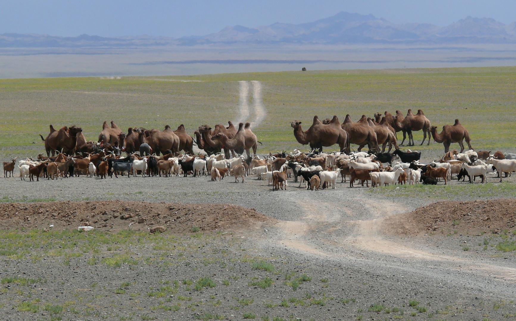 Straßenblockade in der Mongolei