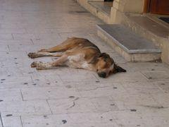 Straßenhund auf Korfu beim Mittagsschlaf