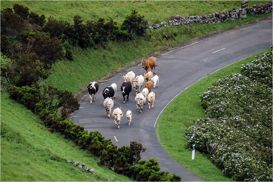 Straßenverkehr auf Flores