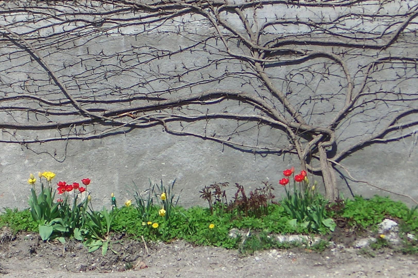 strauchrelief mit tulpen