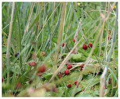 Strawberry Fields Forever ... II