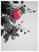 °strawberrycream°