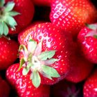 Strawberry(fields) 4 ever