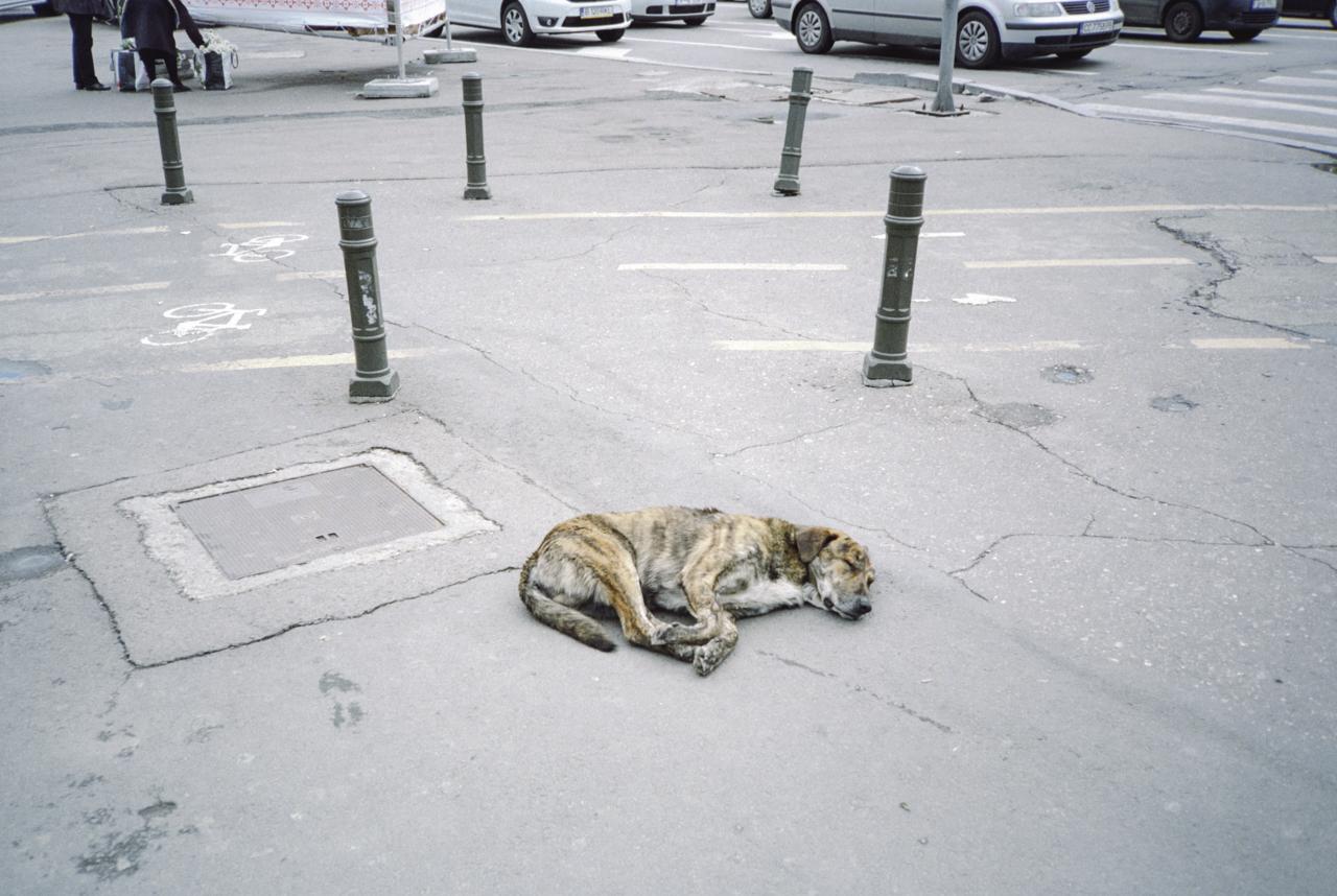 stray dog sleeping